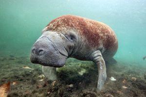 nature underwater animals