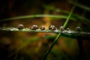nature vignette grass water drops macro