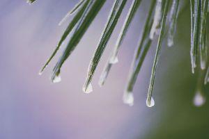nature water drops rain plants