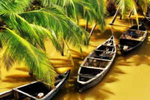 nature water river palm trees india sunlight wood boat flood shadow