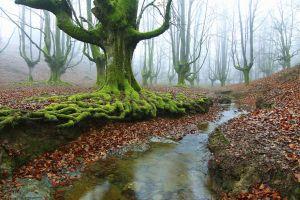 nature water stream landscape forest mist