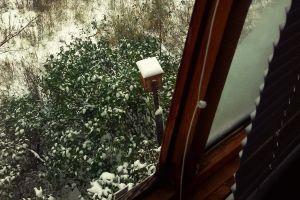 nests russia balcony snow