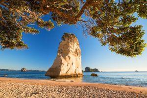 new zealand sand nature sea beach landscape trees rock