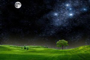 night sky field trees moon