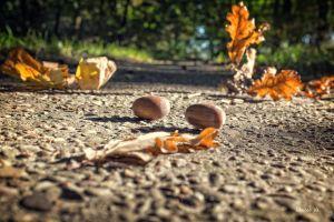 nuts outdoors oak