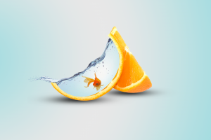 orange (fruit) orange digital art fish water