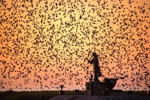outdoors animals birds