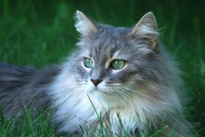 outdoors animals green eyes cats