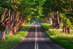 outdoors asphalt road trees