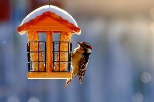 outdoors birds animals