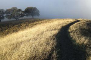 outdoors field landscape trees