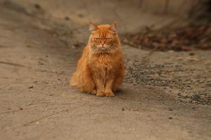 outdoors mammals animals cats