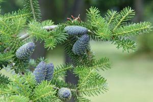 outdoors plants closeup