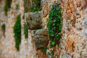 outdoors plants macro