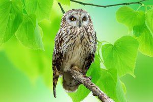 owl leaves animals birds