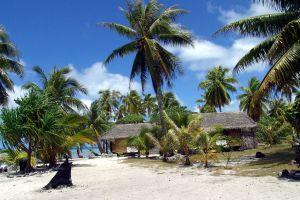palm trees island beach cabin tropical