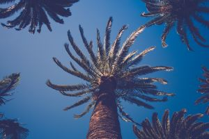 palm trees nature worm's eye view plants