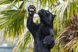 palm trees plants animals big cats panthers