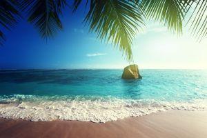 palm trees sea beach horizon nature tropical