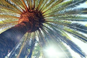 palm trees trees worm's eye view