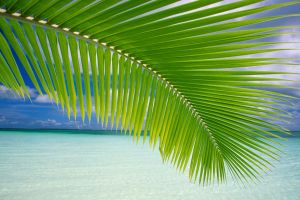 palm trees tropical plants