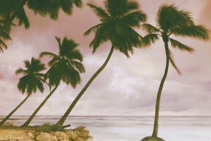 palm trees water beach