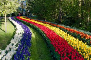 park field flowers colorful plants