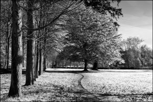 park nature path trees monochrome