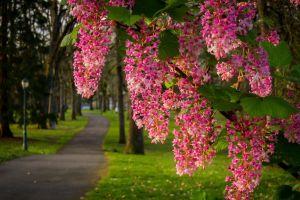 park outdoors plants flowers