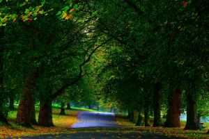 park path branch nature wood grass field leaves bench trees forest fall