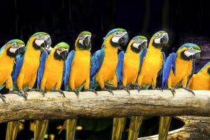 parrot birds animals