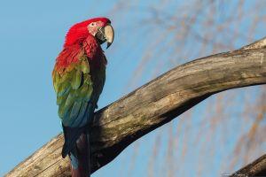 parrot nature parrot