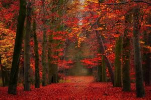 path fairy tale leaves yellow red forest nature trees fall landscape