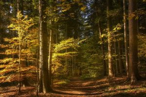 path nature forest trees landscape sunlight fall