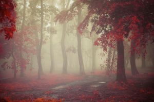 path red leaves red trees puddle rain landscape nature morning leaves mist fall dirt