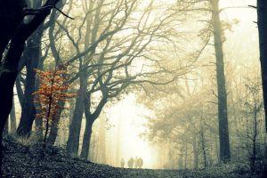 people mist trees road