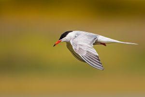photography animals birds nature