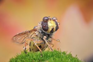 photography insect animals