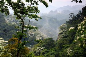 photography nature flowers hills trees mist valley