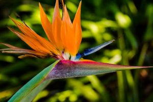 photography nature plants