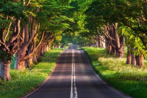 photography nature road trees