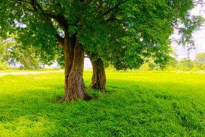 photography nature sri lanka road green trees rice paddy