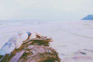 photography outdoors seashells