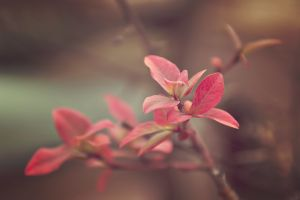 photography plants macro nature branch flowers