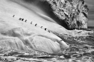 photography sea antarctica jumping landscape iceberg nature animals sebastiao salgado waves ice penguins monochrome