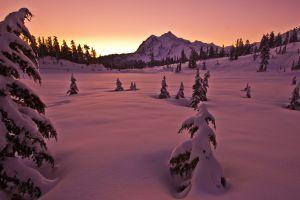 pine trees landscape snow