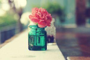 pink flowers flowers jars