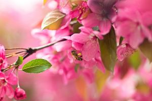 pink flowers macro animals flowers insect plants bees