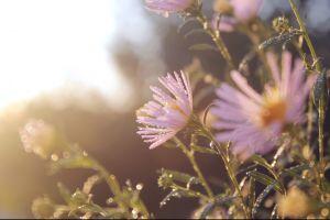 pink flowers plants flowers