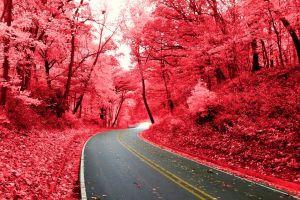 pink road nature